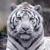 Tigre11ify