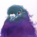 Mr. PurplePigeon